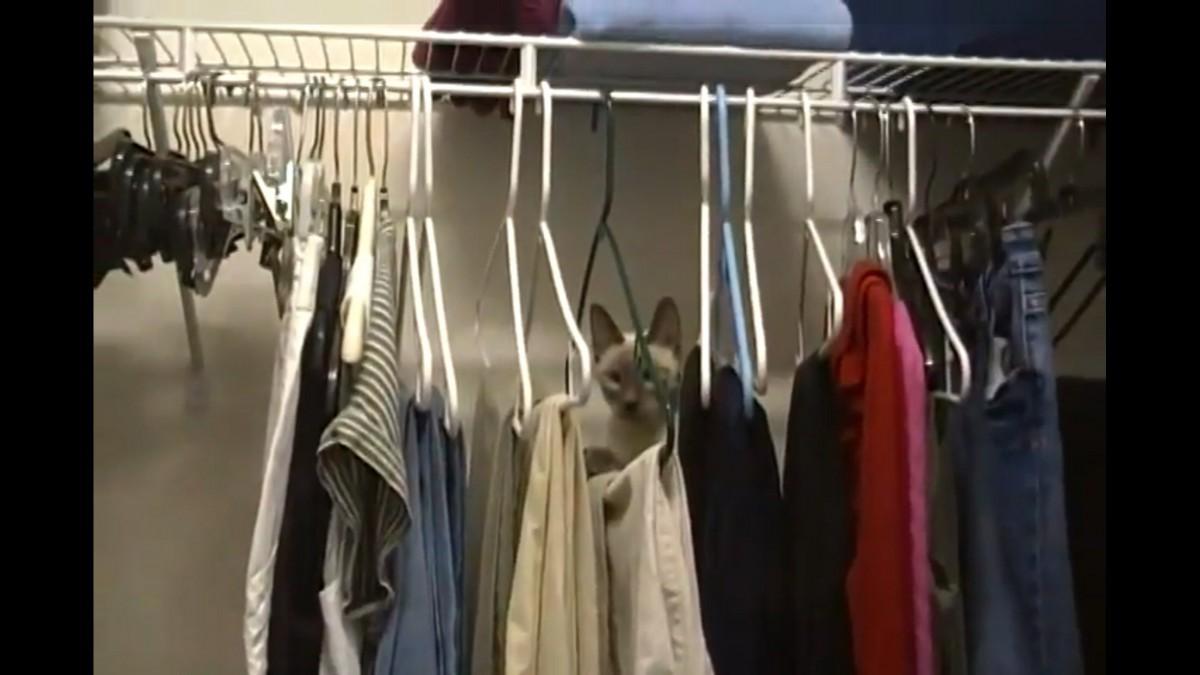 ハンガーを伝いクローゼットの上を目指すアクロバット猫ちゃん