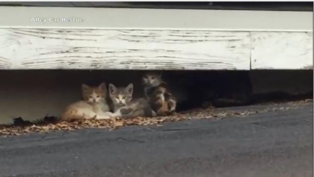 屋根の上に住み着いた13匹の野良猫ファミリーを保護団体が救助!