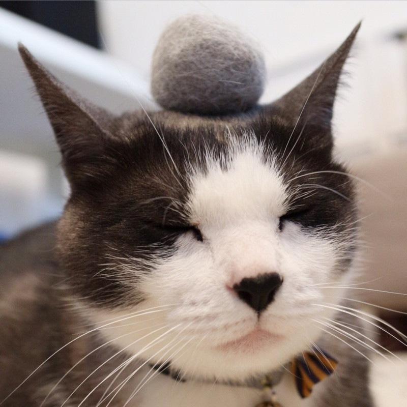 換毛期の猫たちにはこまめはブラッシングを!!