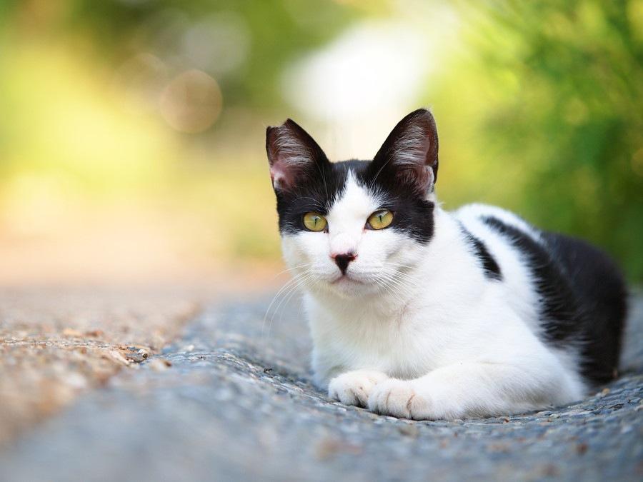 猫の関節炎について その症状と原因、治療法とは
