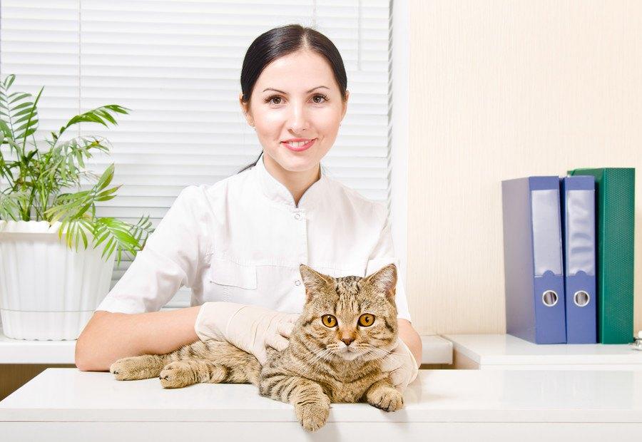 猫に去勢手術を受けさせる時の値段や助成金制度について