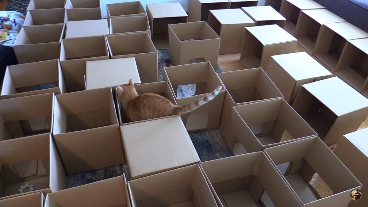 猫ちゃん大興奮!ダンボールを並べて作るのは…巨大迷路!