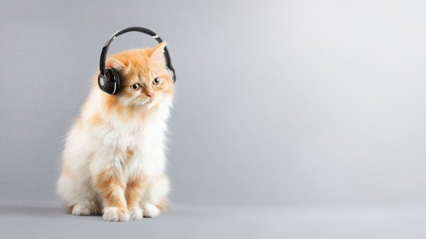 地震速報やサイレンなどの音に猫を慣らす方法