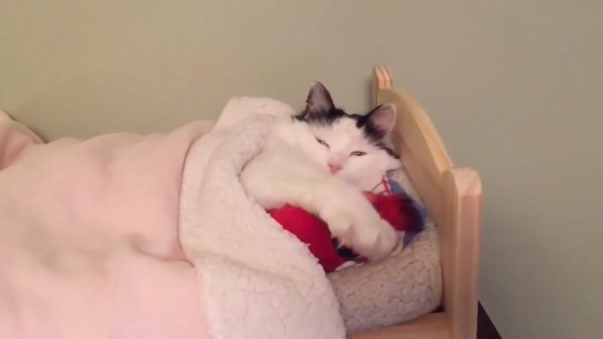 ベッドに抱き枕、そこに眠るは1匹の猫