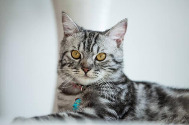 猫がペットに向いている理由と初めての方にオススメの3種