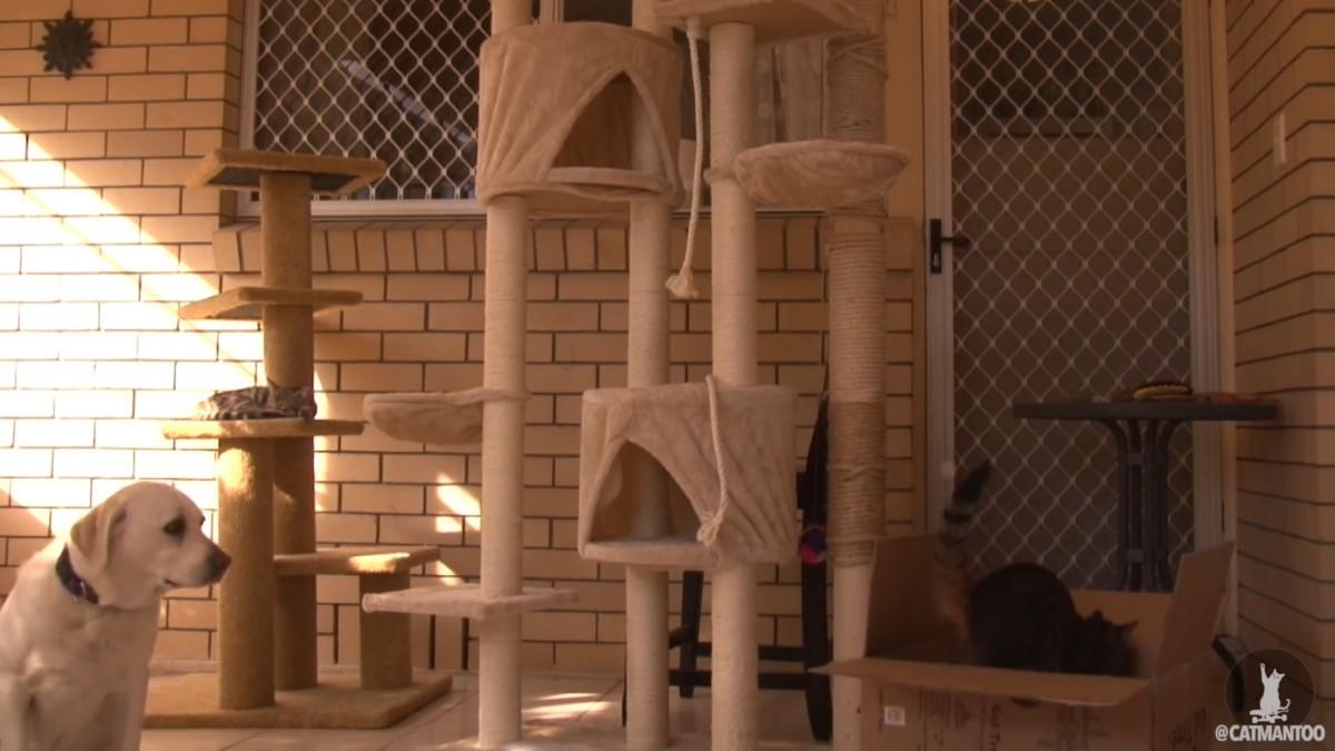 新しいキャットタワーが届きました!猫の反応は?
