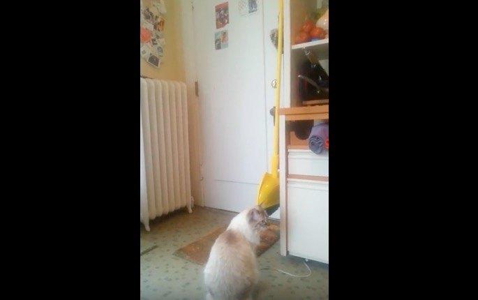 「ずっとずっと待ってたニャ!」戦地から帰還するダディを待ち続けた猫ちゃん