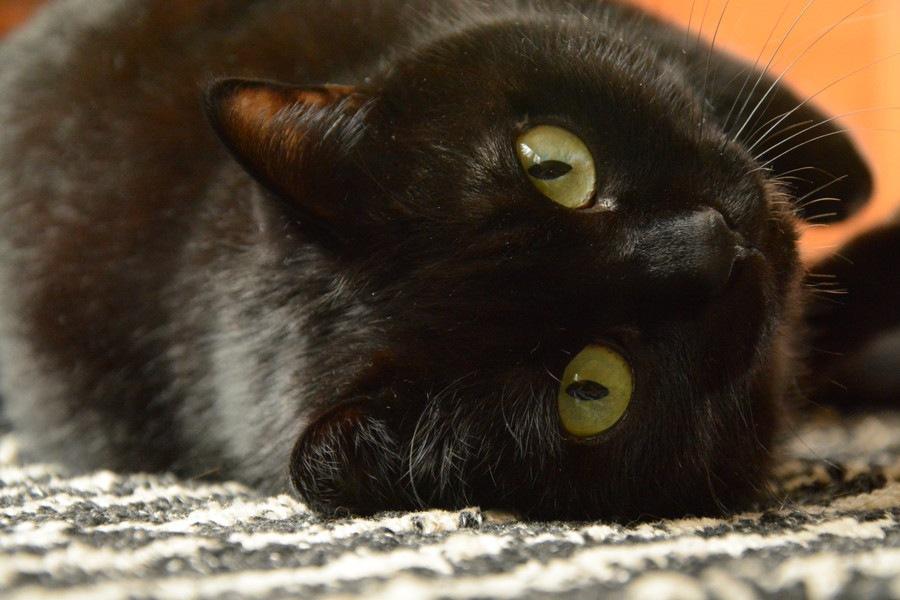 猫がちゅーるに夢中になる理由!その成分や与え方、注意点とは