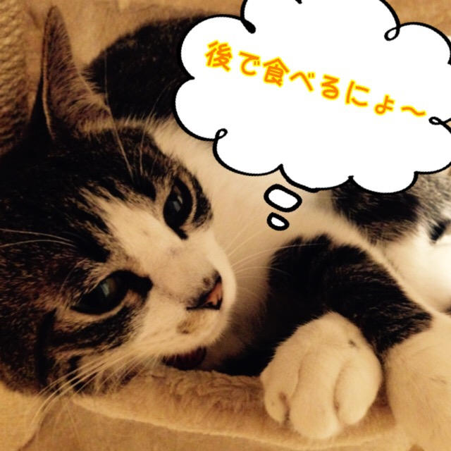 猫の生態の知られざる7つの不思議とは