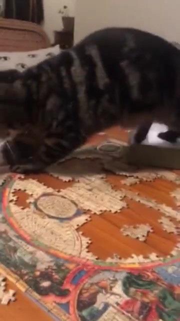 猫の手を借りて大惨事になってしまったパズル