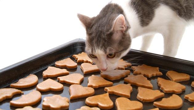 可愛い猫のクッキーを販売しているおすすめのスイーツ店5選