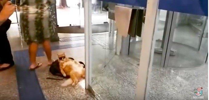 なぜそこに?そしてその格好は?スーパーリラックスな猫の出現
