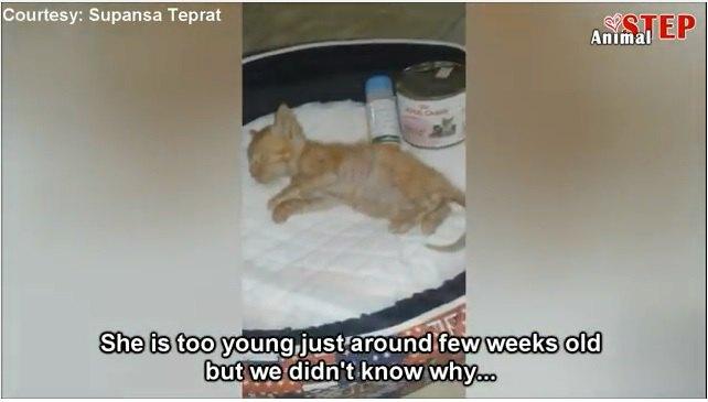 助けを求めて鳴いている子猫が道にいたら、あなたはどうしますか?