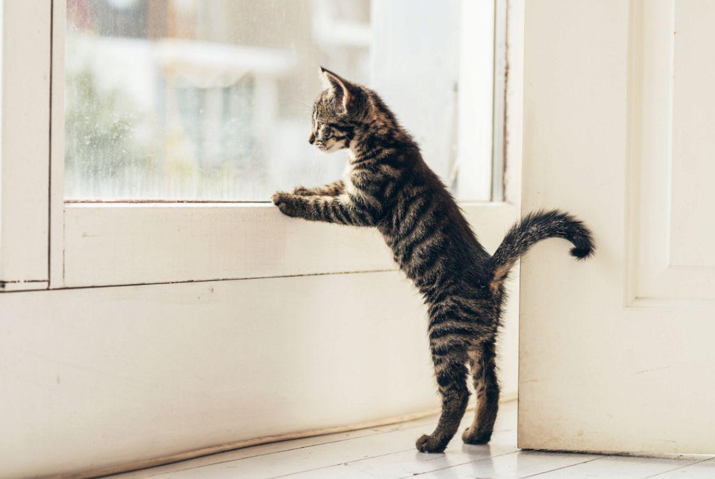 猫が網戸を登って脱走してしまうことの対策