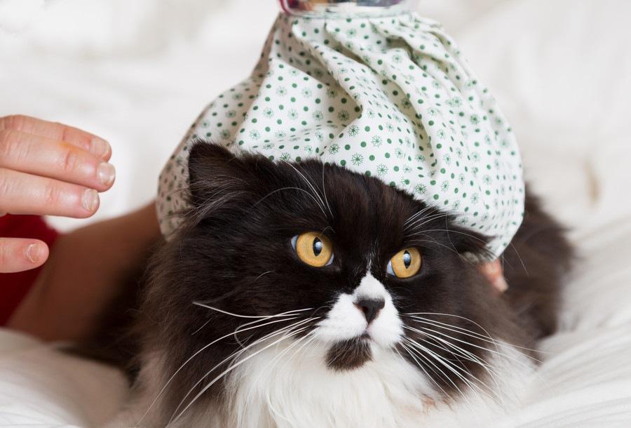 猫がご飯をたくさん食べるのに痩せてきた…危険な病気のサイン