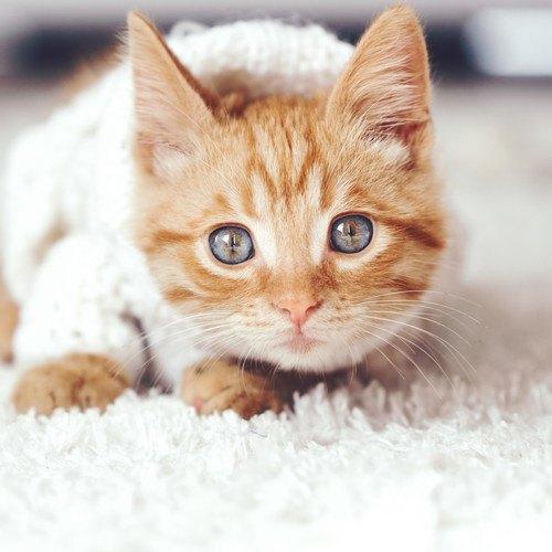 猫モチーフのファッションが熱い!かわいくておしゃれなアイテム