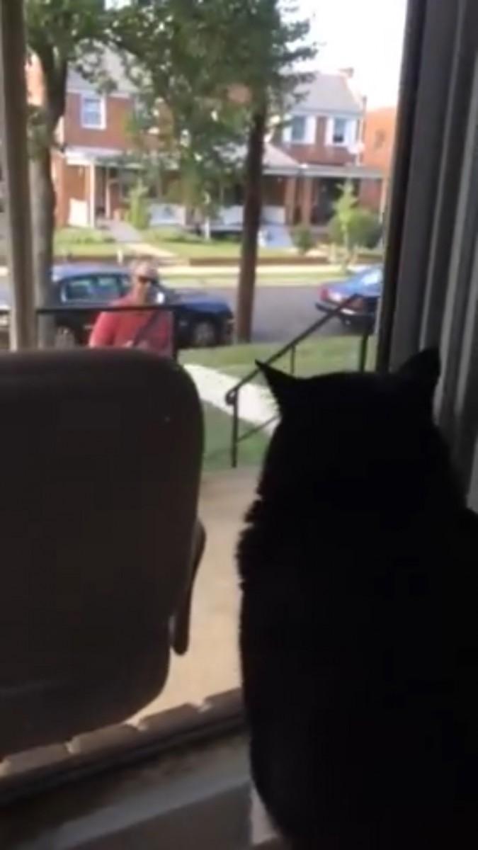 「何で犬が居るニャ!」ご主人様が見知らぬ犬を連れ帰って来た!猫さん大ピンチ!
