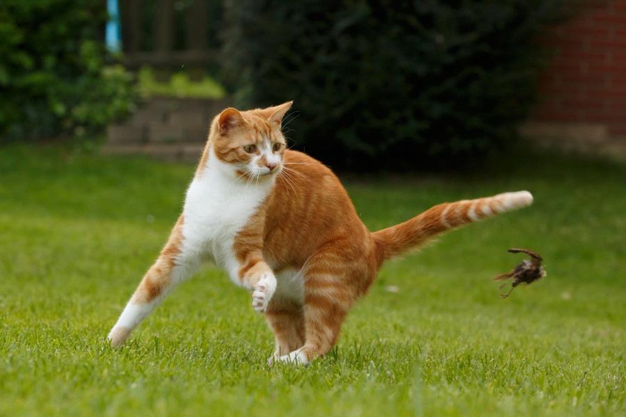 猫が夜中に騒ぎ出す「運動会」やめさせるのはどうしたらいい?