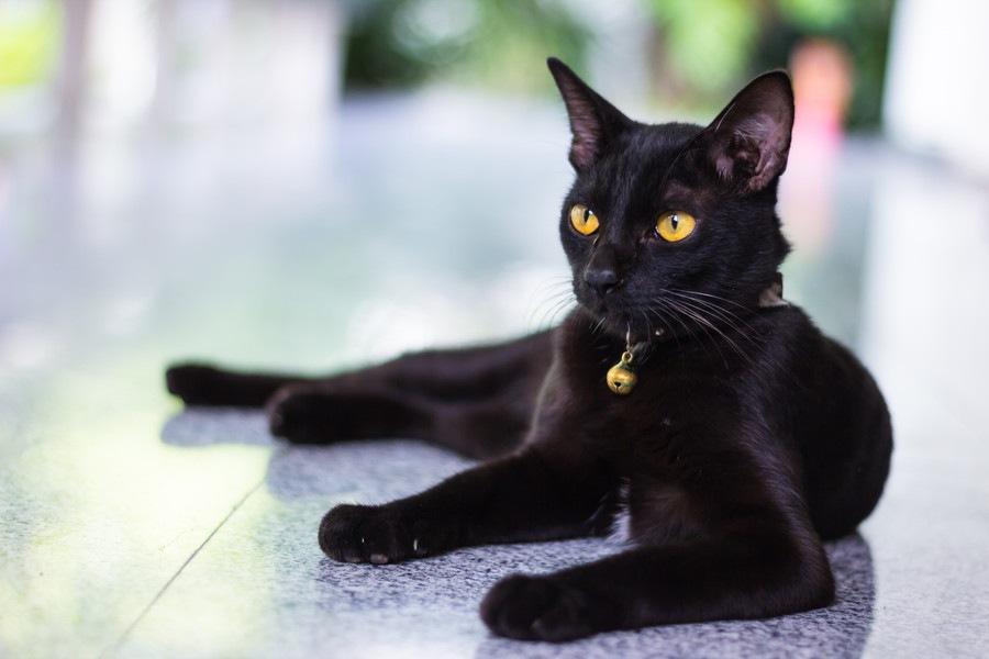 マイニャンバーは猫の迷子札!機能や発注方法について