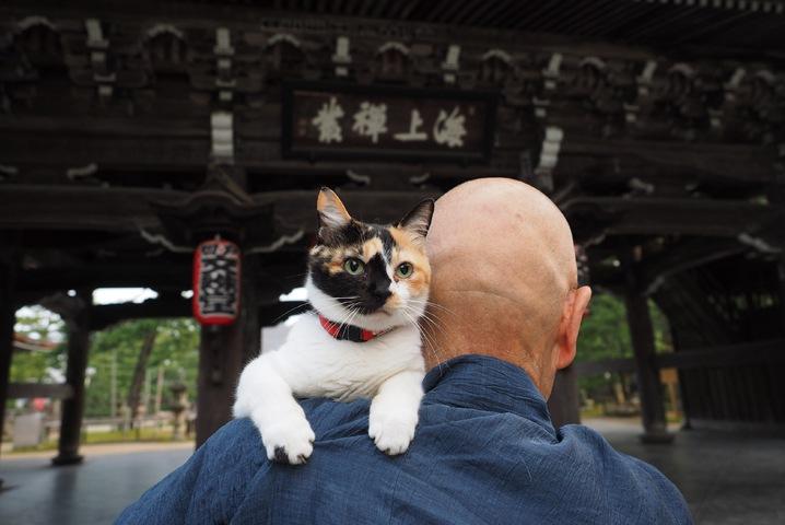 「ねこの京都」は移り変わる京都の四季と猫の写真展!内容やグッズ情報
