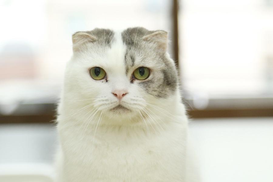 猫が褒めて欲しい時にする5つの行動