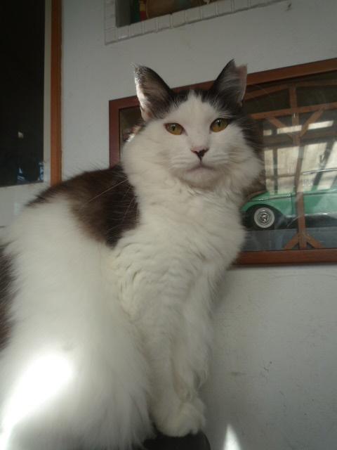 ママが消えた!海で出会った一人ぼっちの猫『しょーちゃん』を我が家に!
