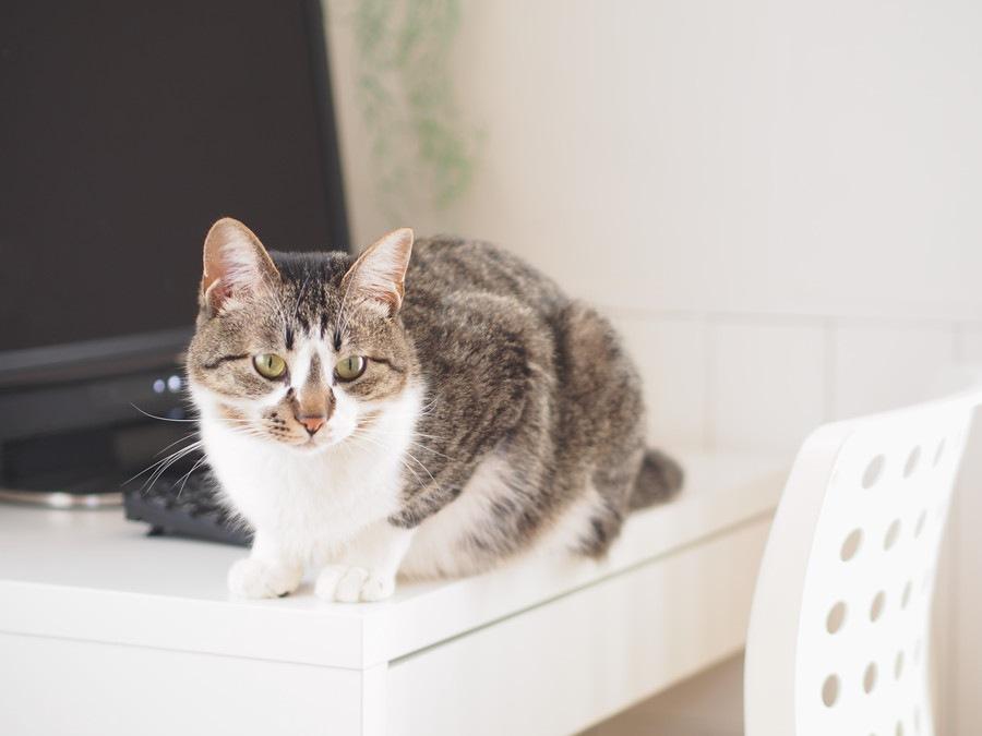 猫は撫でられると嬉しいの?気になる猫の気持ちとサインをご紹介します
