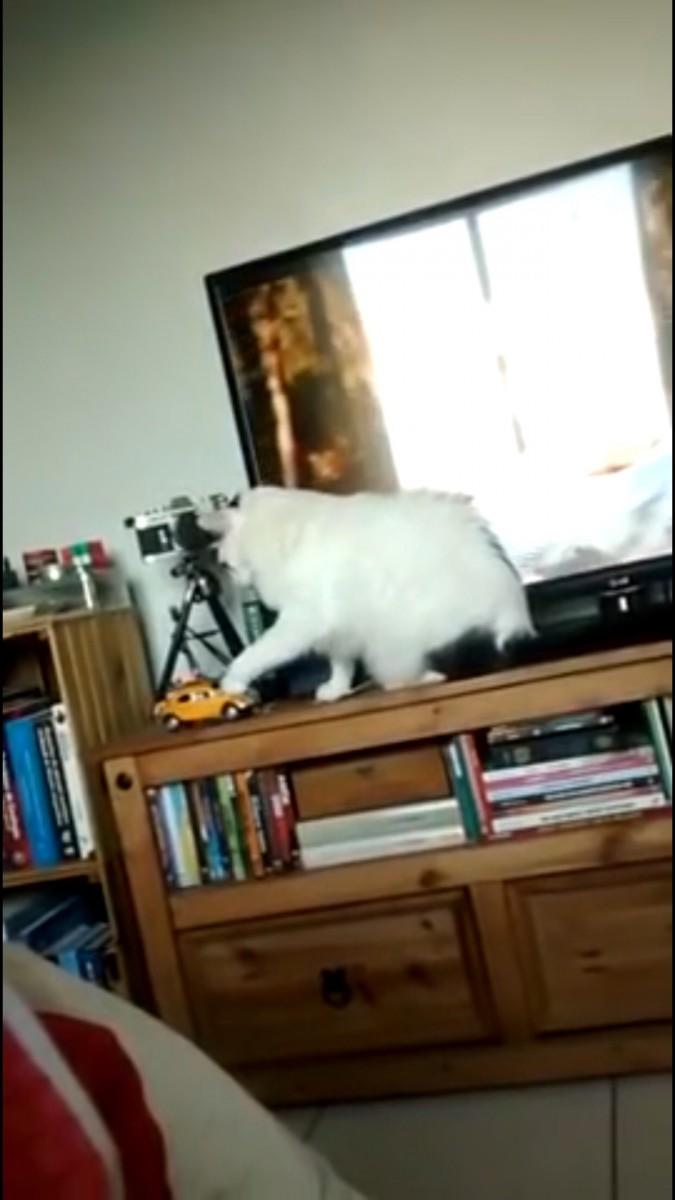 「あ、バレた?」チョイチョイしてたミニカーを元に戻す猫