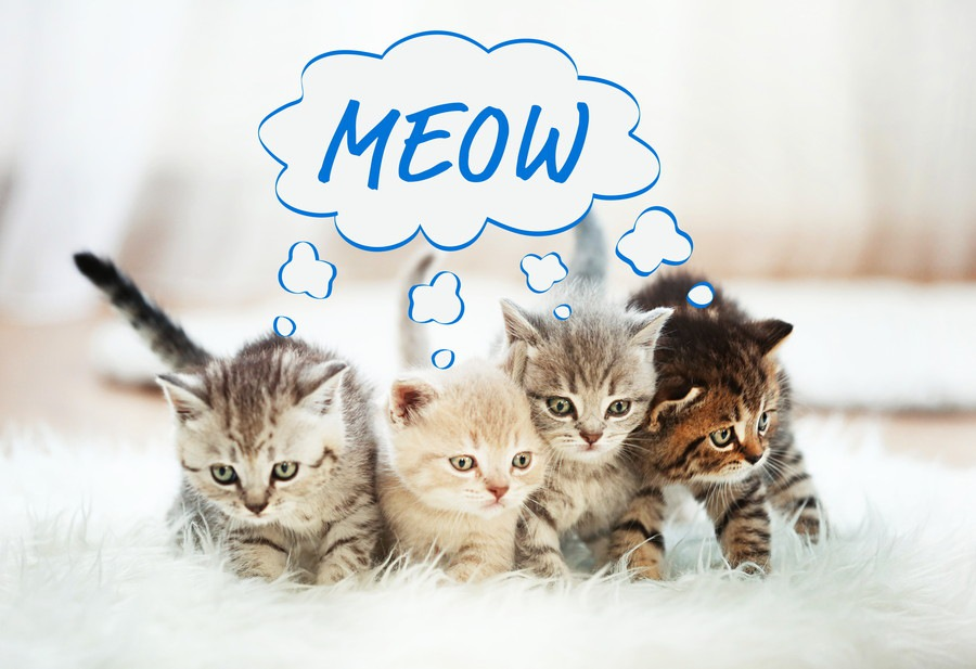 猫の色々な鳴き声動画15選!