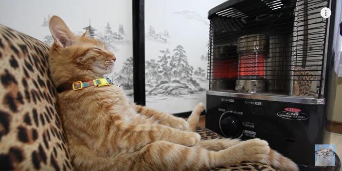 ストーブの前でおじさん座りの猫♪