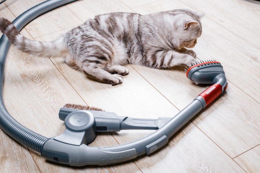 猫の抜け毛対策4選!便利な道具や利点、注意点までを丸ごとご紹介