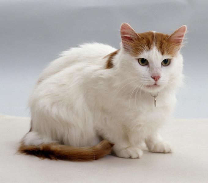 「猫への愛情は信仰の一つである」イスラム教と猫の関係が面白い!