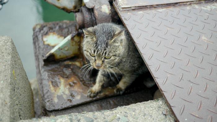 野良猫が雨の日にいる場所とその過ごし方