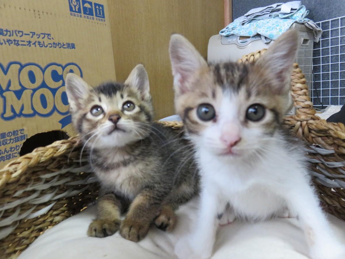 保護猫を同時に2匹をお迎えしたら、大変な事も楽しい事も2倍に!