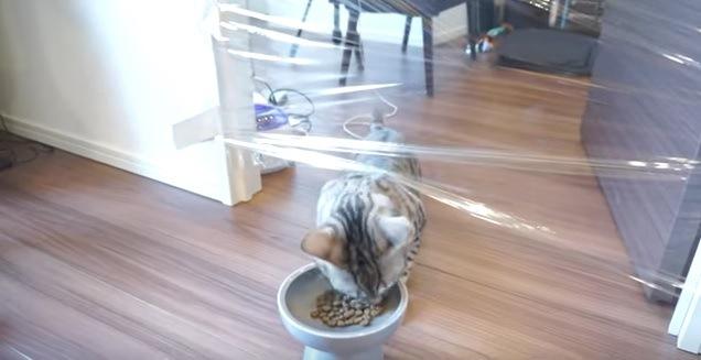 サランラップドッキリをかけられた猫の反応は・・・!