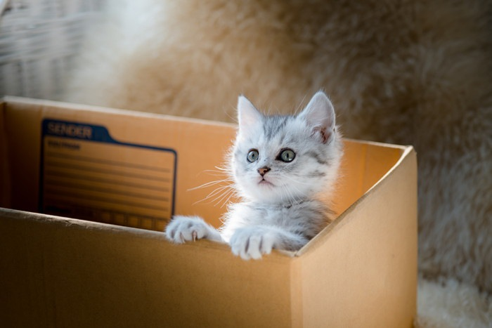 猫を拾ったら!飼えない場合の対処法からその後の洗い方まで