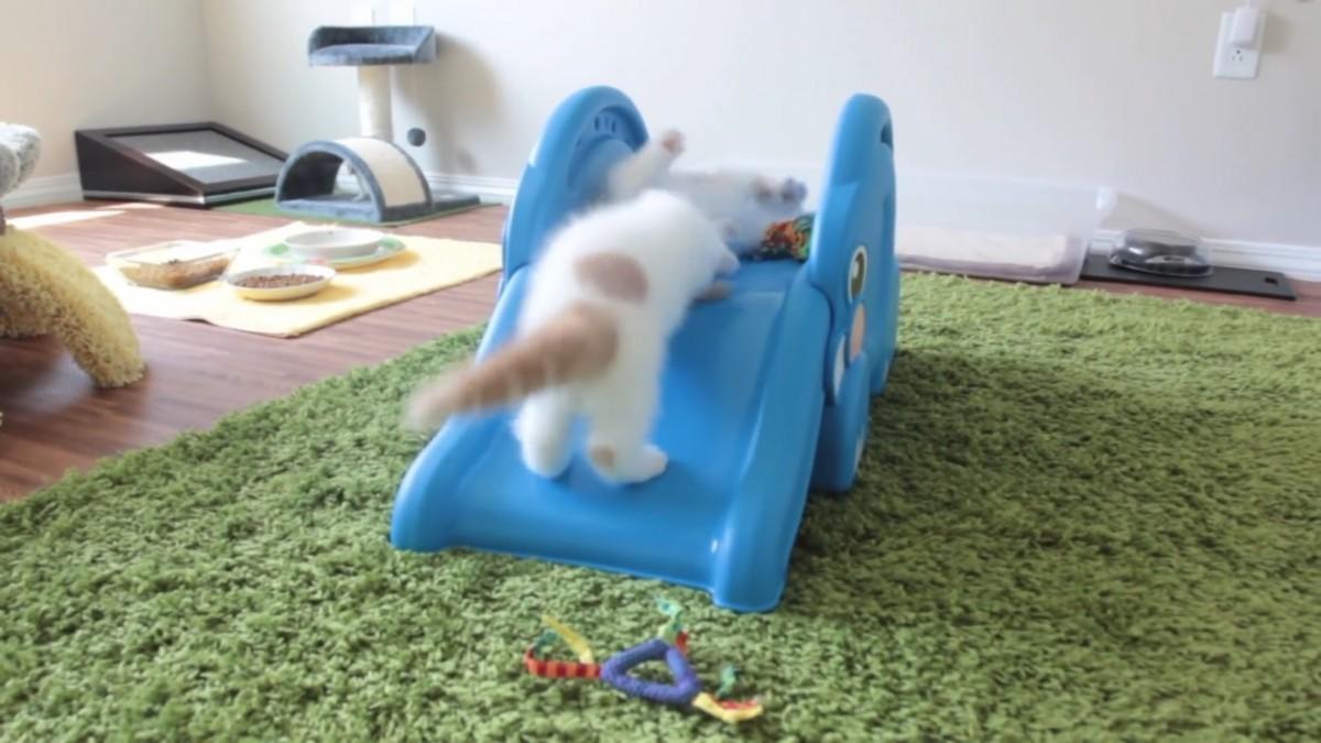 ふわふわの子猫が滑り台をただ滑るだけ…だけど可愛い!癒しの動画