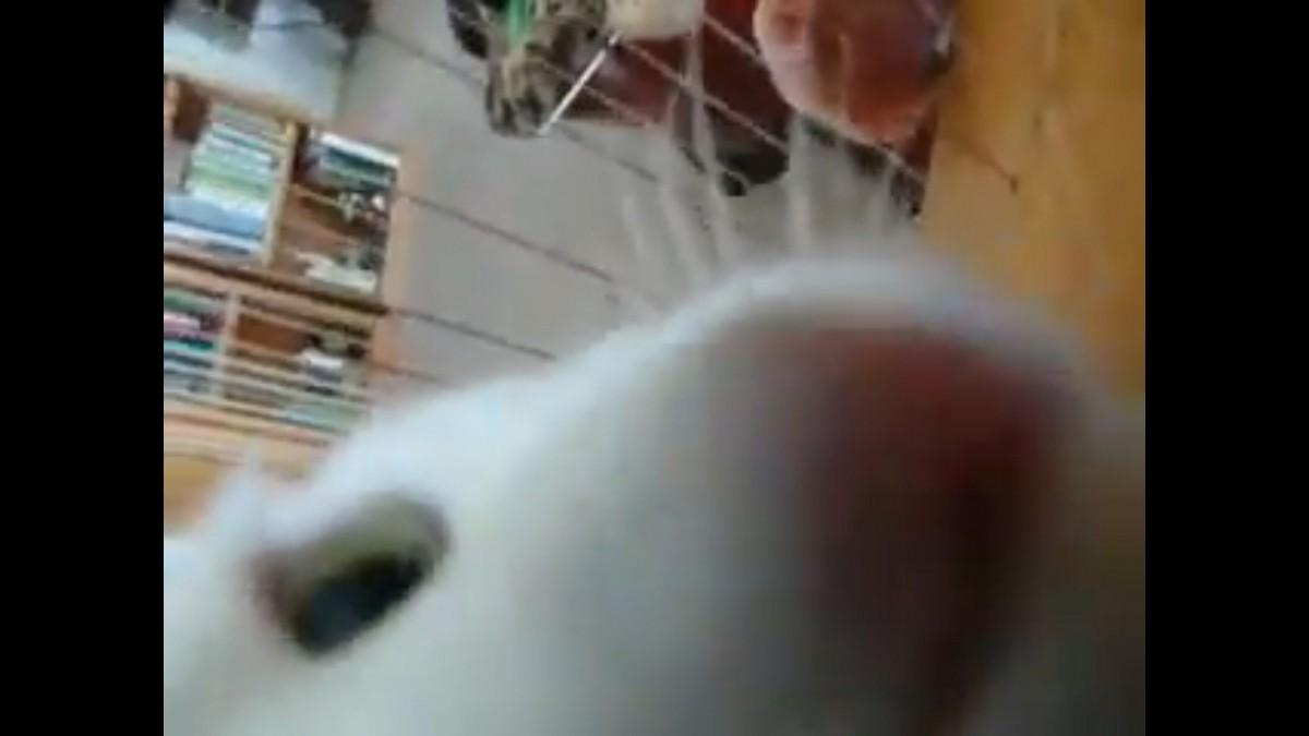 「僕も演奏するニャ!」ご主人サマの背中を見て育ったハープ演奏猫