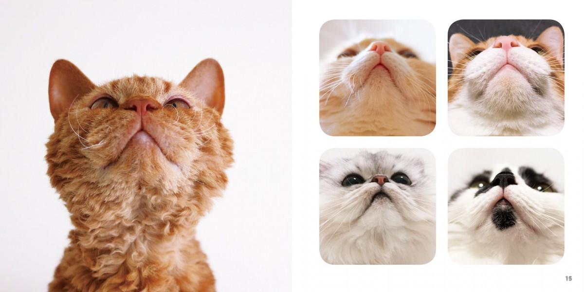 猫のパーツ好きにはたまらない写真集『ねこのおくち』