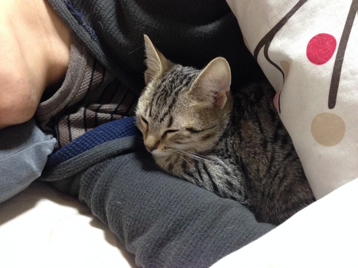 猫の尻尾の付け根を触ると腰を上げる理由!その際の注意点とは