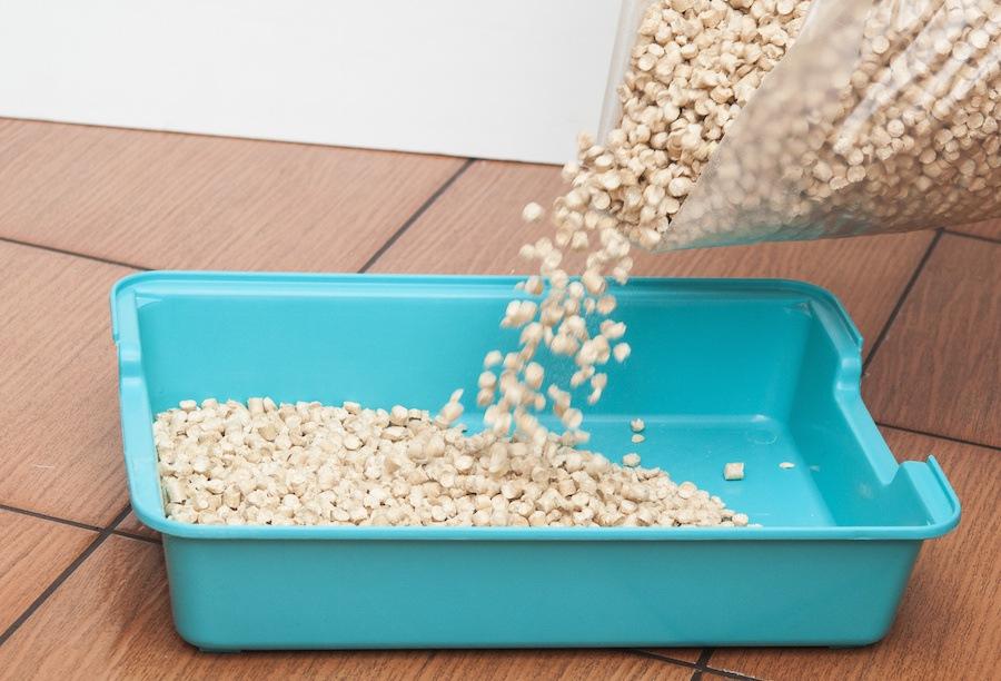 猫砂を新しいものに変更する時注意したい3つの事