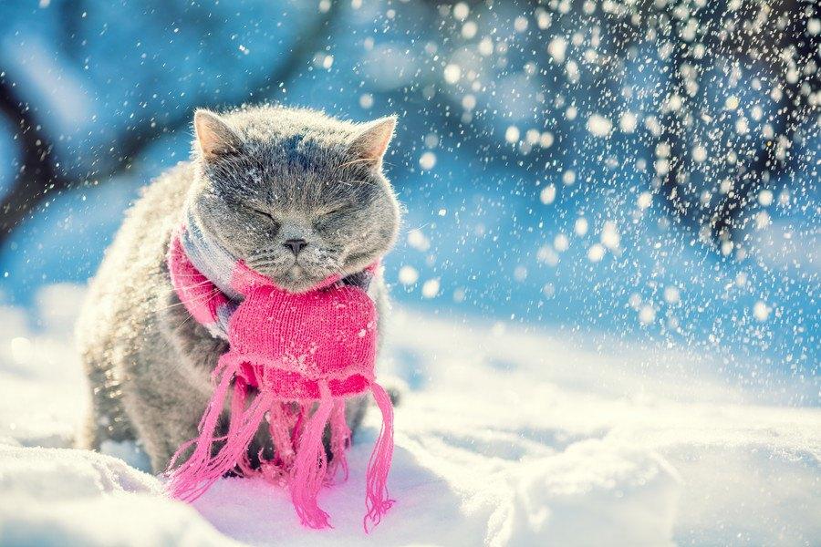 猫はとっても寒がり!暖をとりがちな10の場所