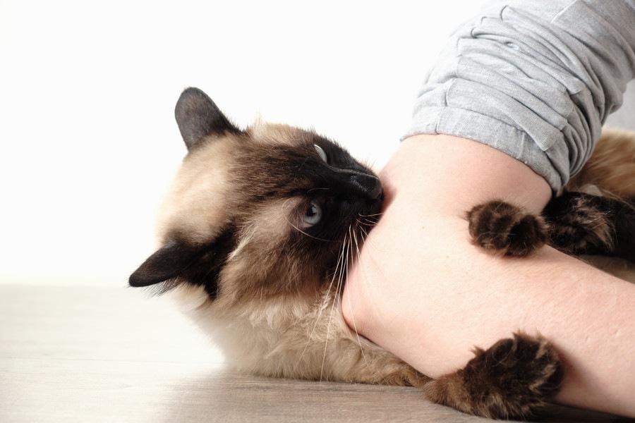 猫が痛いくらいに噛む理由と対処法