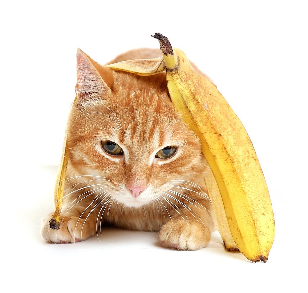 管 結石 バナナ 尿