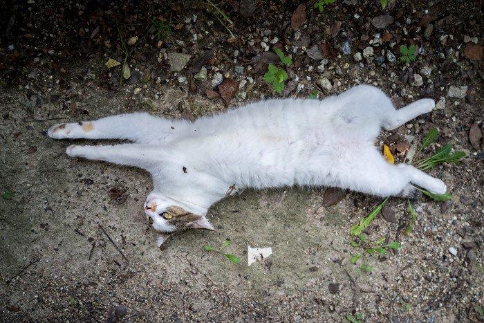 完全にリラックスする野良猫