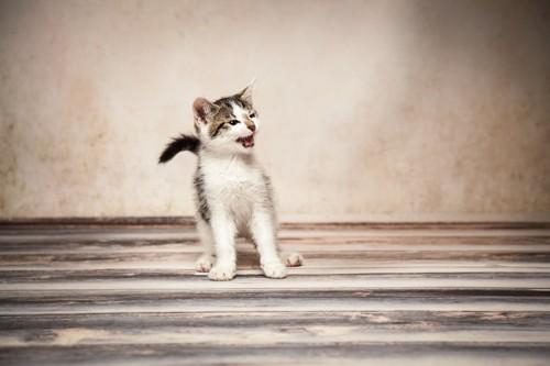 ビックリしている子猫