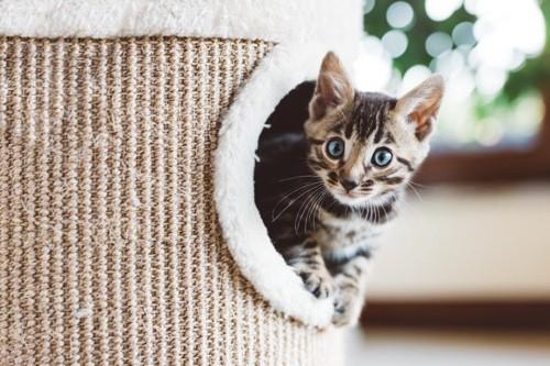 室内で遊ぶ猫