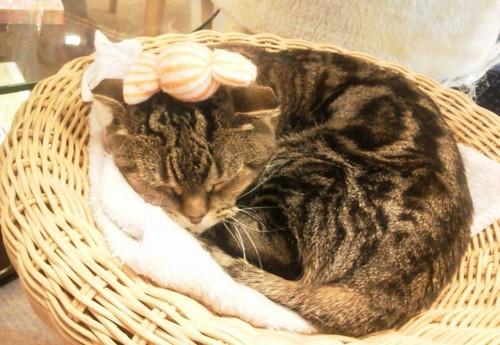寝てる猫アメショ