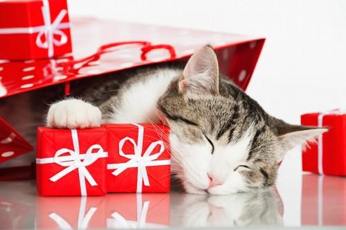 小さなプレゼントと袋に入って眠る猫
