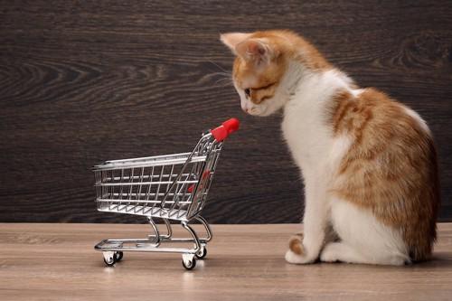 ショッピングカートを見つめる子猫